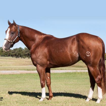 Boonsandual - Showhorse - Circle Y Ranch