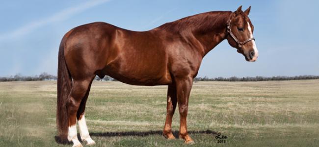 Im Countin Checks - Stallion - Circle Y Ranch