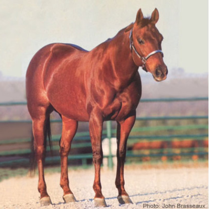Meradas Little Sue - Broodmare - Circle Y Ranch