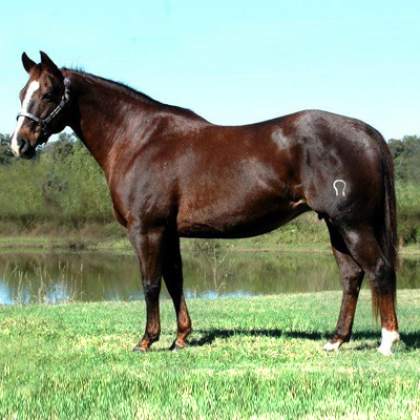 One Time Soon - Broodmare - Circle Y Ranch