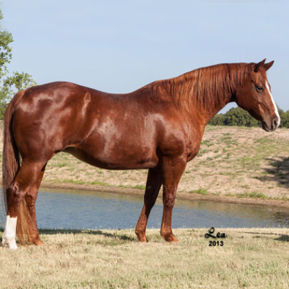 Poosmal - Broodmare - Circle Y Ranch