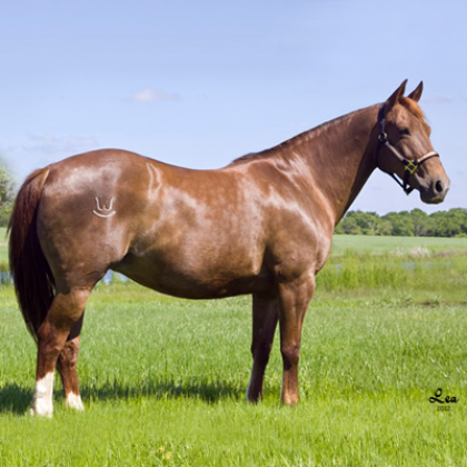 RW Sallycat - Broodmare - Circle Y Ranch