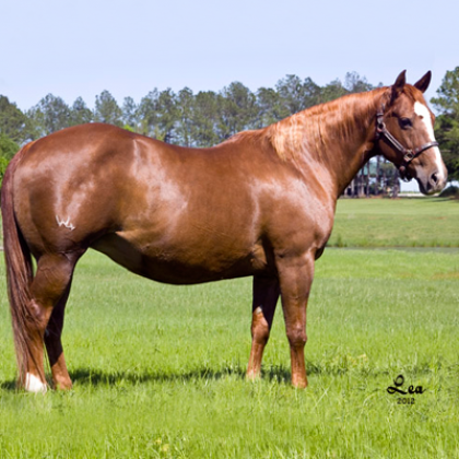 Staraleno - Broodmare - Circle Y Ranch